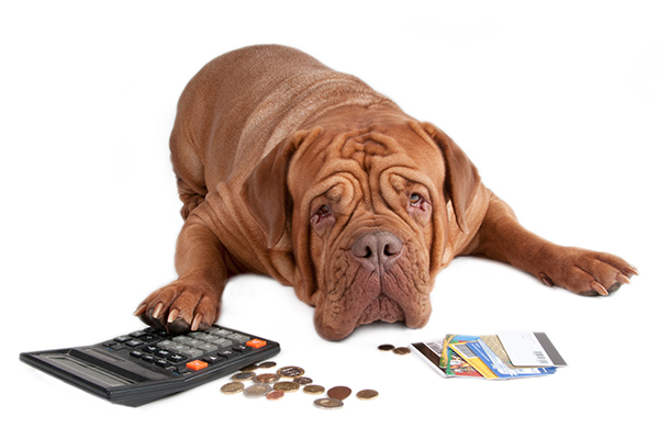 dog-credit-card-600x400.jpg